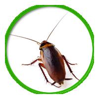 蟑螂簡介防治