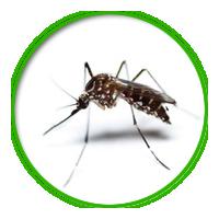 病媒蚊簡介防治