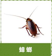 台中除蟲-蟑螂