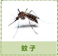 台中除蟲-蚊子